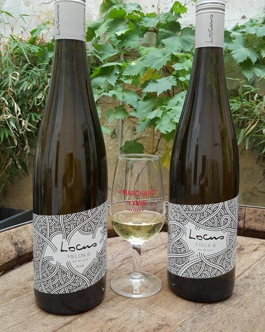 Locus. Folle Blanche et Melon de Bourgogne